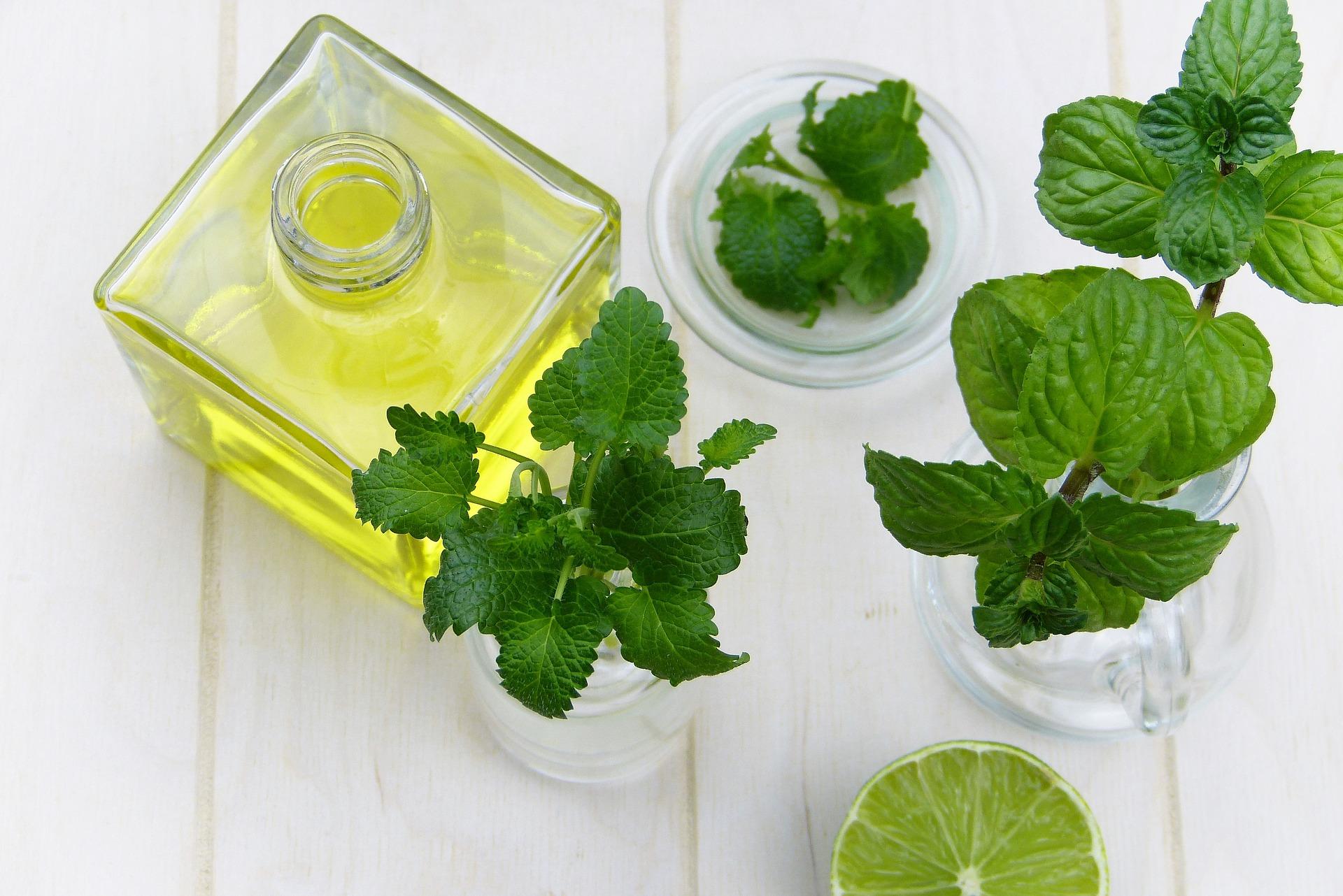 elaborar unguentes con aceite de oliva